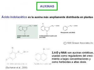 AUXINAS cido indolactico es la auxina ms ampliamente