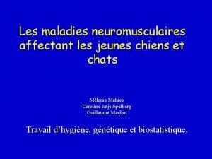 Les maladies neuromusculaires affectant les jeunes chiens et