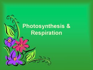 Photosynthesis Respiration Overview of photosynthesis and respiration SUN