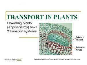 TRANSPORT IN PLANTS Flowering plants Angiosperms have 2