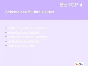 Bio TOP 4 Schema des Blutkreislaufes schrittweiser Aufbau