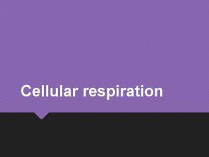 Cellular respiration Cellular respiration Occurs in mitochondria of