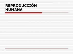REPRODUCCIN HUMANA APARATO REPRODUCTOR MASCULINO TESTCULOS o Son