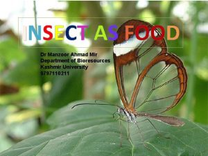 INSECT AS FOOD Dr Manzoor Ahmad Mir Department