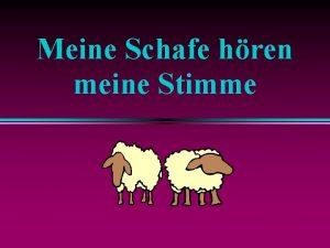 Meine Schafe hren meine Stimme Meine Schafe hren