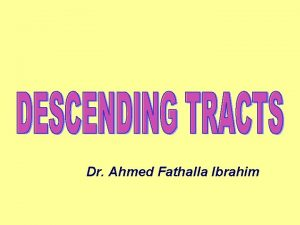 Dr Ahmed Fathalla Ibrahim CORTICOSPINAL TRACTS Concerned with