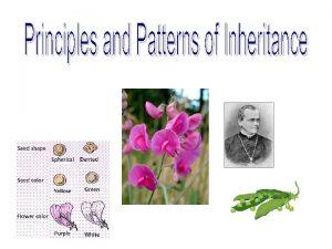 I History of Genetics Genetics the scientific study