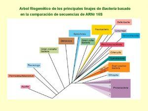 Arbol filogentico de los principales linajes de Bacteria