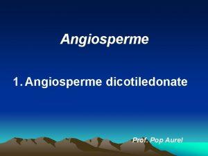 Angiosperme 1 Angiosperme dicotiledonate Prof Pop Aurel Angiospermele