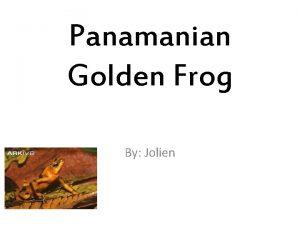 Panamanian Golden Frog By Jolien Habitat mountainous rainforest