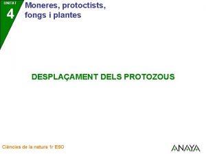 UNITAT 4 Moneres protoctists fongs i plantes DESPLAAMENT