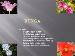 BUNGA Bagianbagian bunga Vaskularisasi pada bunga Struktur sepala