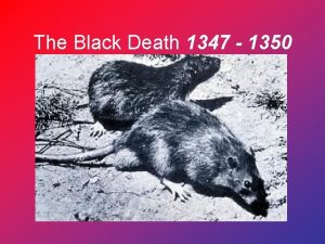 The Black Death 1347 1350 Dead littered the