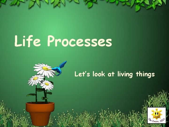 Life Processes Lets look at living things Living