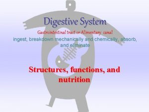 Digestive System Gastrointestinal tract or Alimentary canal ingest