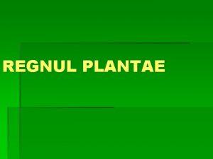 REGNUL PLANTAE Sunt organisme autotrofe fotosintetizatoare Sunt adaptate