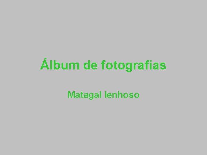 lbum de fotografias Matagal lenhoso Erica umbelata queiroga