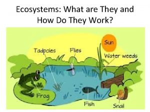 Ecosystems What are They and How Do They
