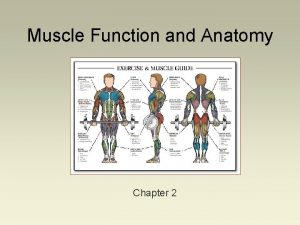 Muscle Function and Anatomy Chapter 2 Muscle Architecture