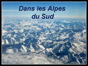 Dans les Alpes du Sud Lys Orang des