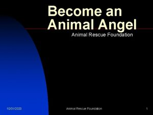 Become an Animal Angel Animal Rescue Foundation 10312020