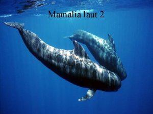 Mamalia laut 2 PINNIPEDS Pinnipeds adalah mamalia laut