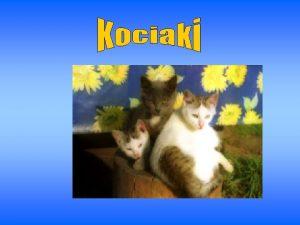Mae kotki to najbardziej psotliwe Zwierzaki domowe Czy