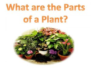 What are the Parts of a Plant Parts
