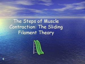 The Steps of Muscle Contraction The Sliding Filament