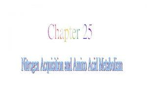 1 The Nitrogen Cycle 2 Amino Acid Biosynthesis