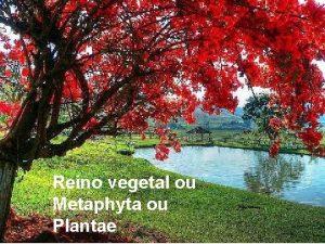Reino vegetal ou Metaphyta ou Plantae Quais so