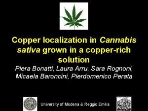 Copper localization in Cannabis sativa grown in a