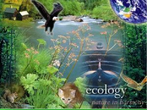 Objectives Define ecology Describe the levels of organization