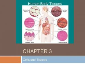 CHAPTER 3 Cells and Tissues Body Tissues 3