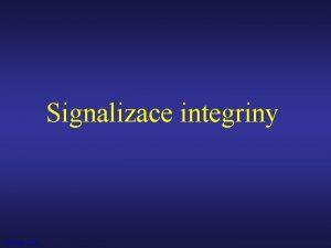 Signalizace integriny Vytek 2009 Extracelulrn matrix ECM Pletivo
