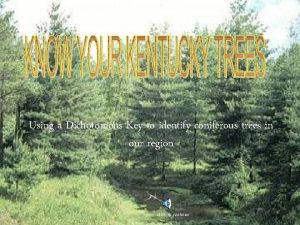 Using a Dichotomous Key to identify coniferous trees