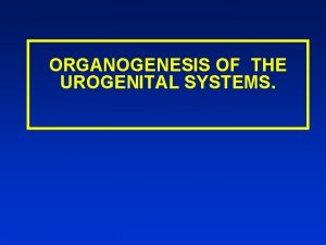 ORGANOGENESIS OF THE UROGENITAL SYSTEMS Indication the formation