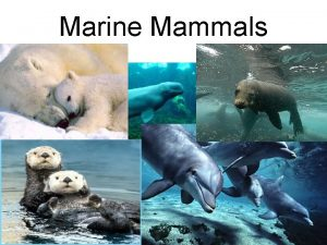 Marine Mammals What is a Mammal Mammals have