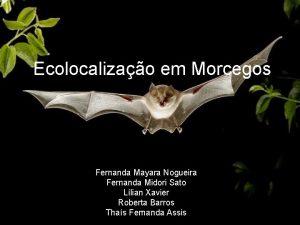 Ecolocalizao em Morcegos Fernanda Mayara Nogueira Fernanda Midori