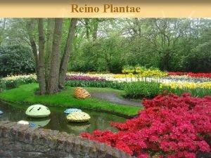 Reino Plantae A Diversidade de Plantas Como as