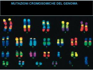 MUTAZIONI CROMOSOMICHE DEL GENOMA Cambiamenti nel numero cromosomico