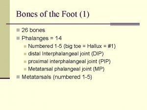 Bones of the Foot 1 n 26 bones