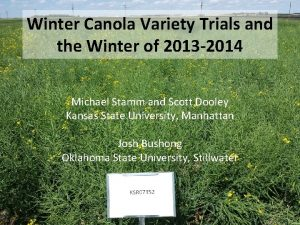Winter Canola Variety Trials and the Winter of