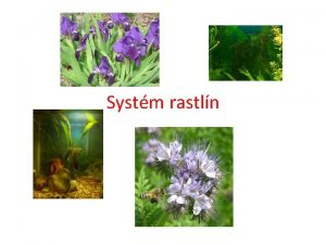 Systm rastln loha 1 Charakterizujte dleit systematick znaky