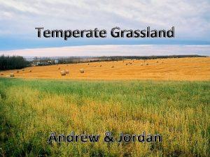 Temperate Grassland Andrew Jordan Temperate Grassland Temperate grasslands