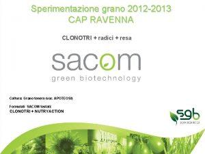 Sperimentazione grano 2012 2013 CAP RAVENNA CLONOTRI radici