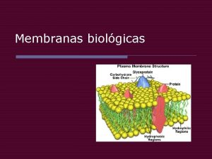 Membranas biolgicas Composicin o Bicapa lipdica con protenas