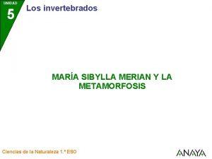 UNIDAD 5 Los invertebrados MARA SIBYLLA MERIAN Y