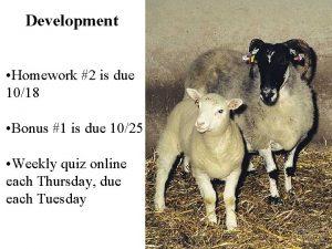 Development Homework 2 is due 1018 Bonus 1
