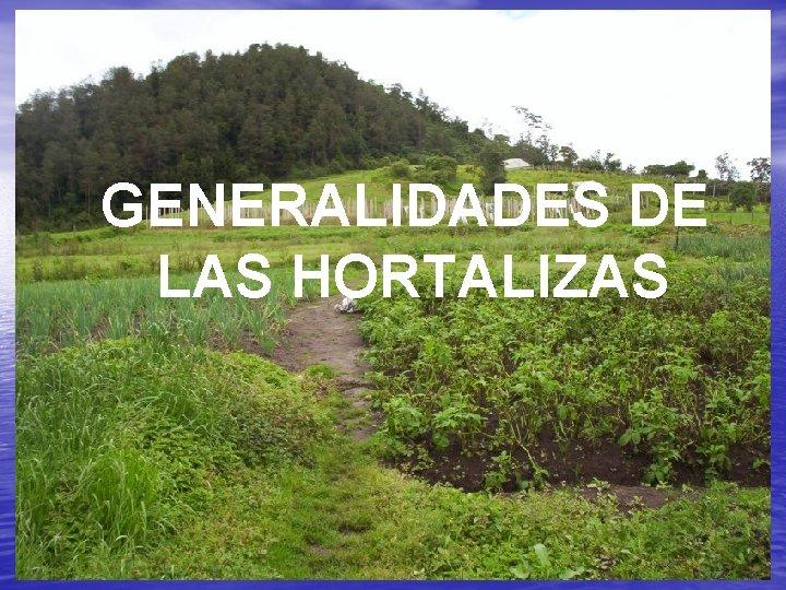 GENERALIDADES DE LAS HORTALIZAS GENERALIDADES Sistema Organizacin de